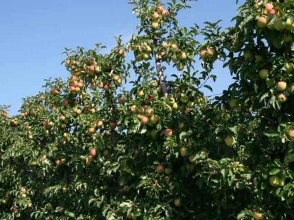 Saft Fruchtgummis